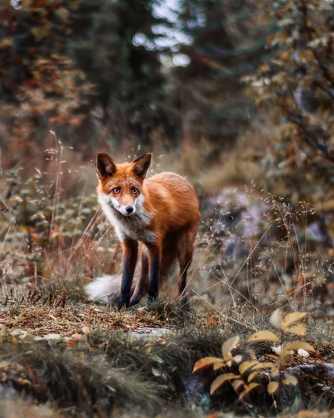 Сказочная природа и животные Финляндии от Йоахима Мюнтера