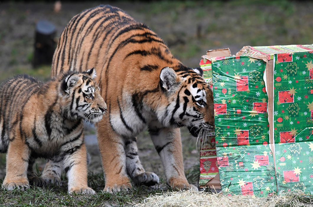 Новогодние подарки для жителей зоопарков