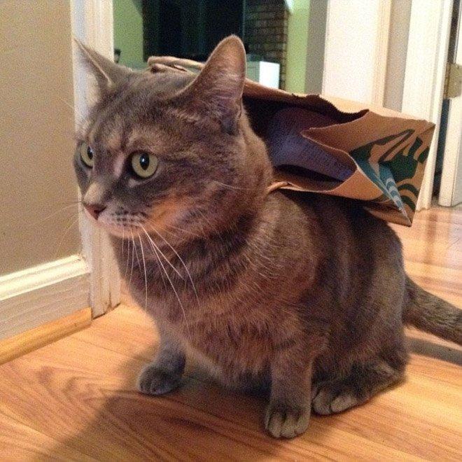 Супергеройские наряды котов