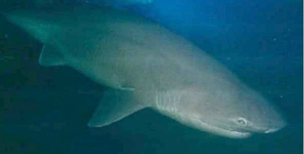 25 самых странных глубоководных существ