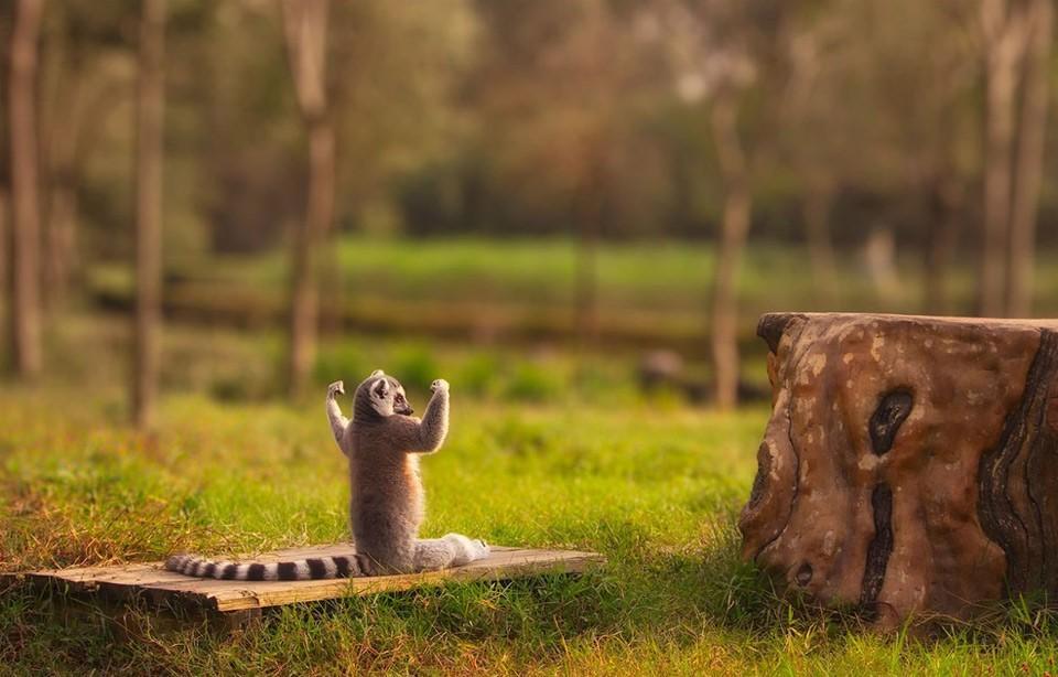 Животные занимаются йогой