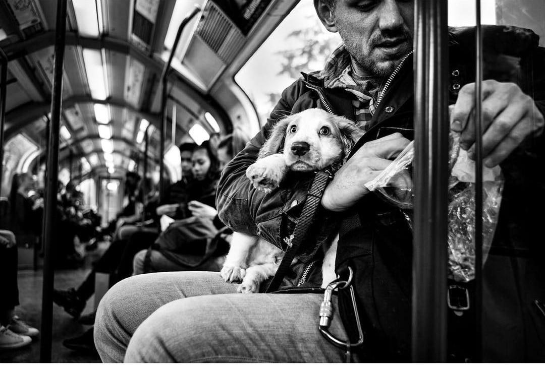 Британец фотографирует собак в разных странах мира