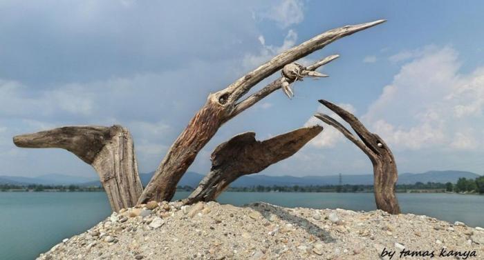Скульптуры из коряг, выброшенных на берег