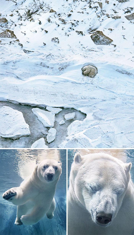 Снимки животных, которые вскоре могут исчезнуть