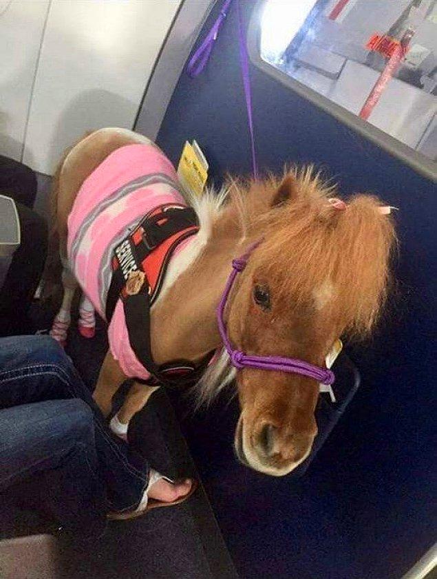 Неожиданные и забавные животные в самолете