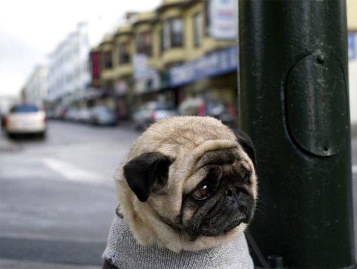 30 животных, перед которыми очень провинились