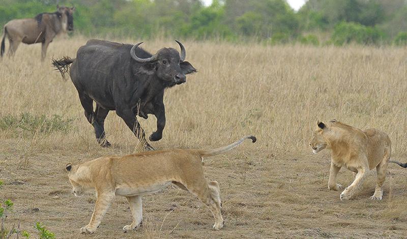 Самые часто убивающие животные