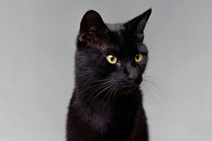Известные коты, которые стали миллионерами