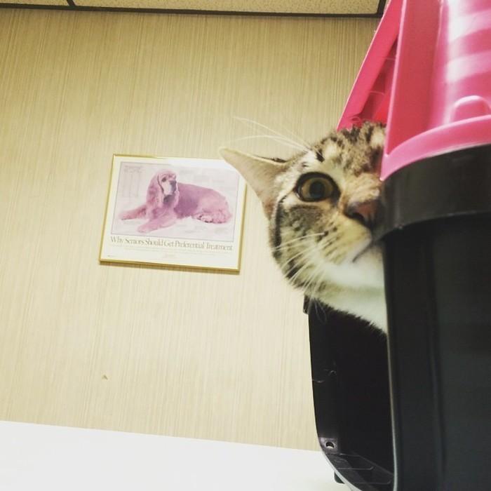 Котики и шокирующий поход к ветеринару