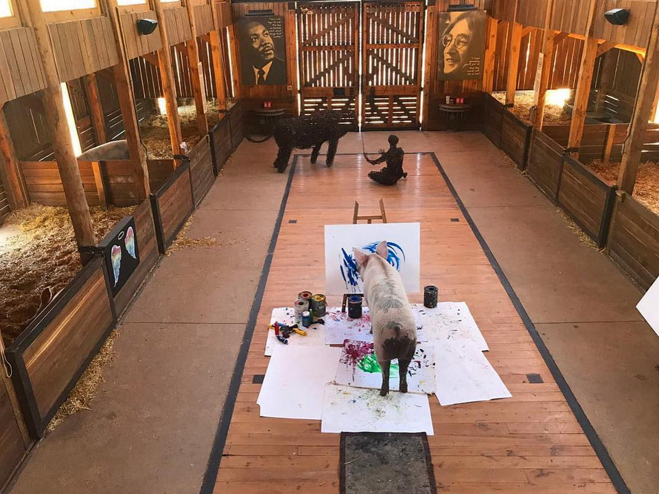 Первая в мире выставка картин поросенка