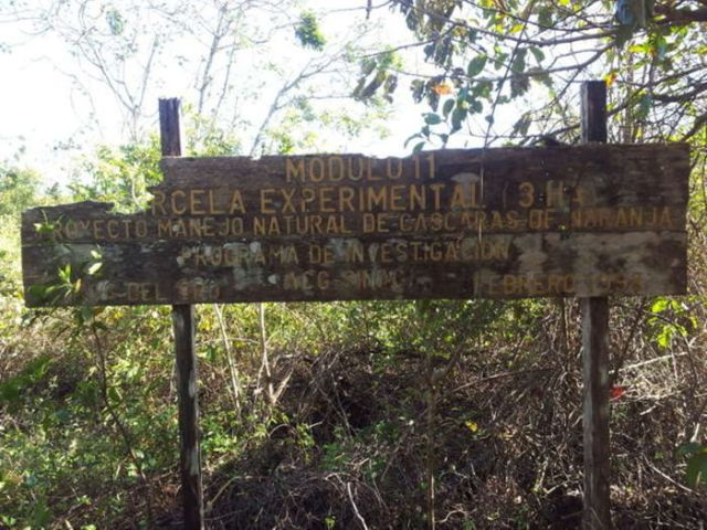 Апельсиновые корки помогли восстановить экосистему вырубленного леса