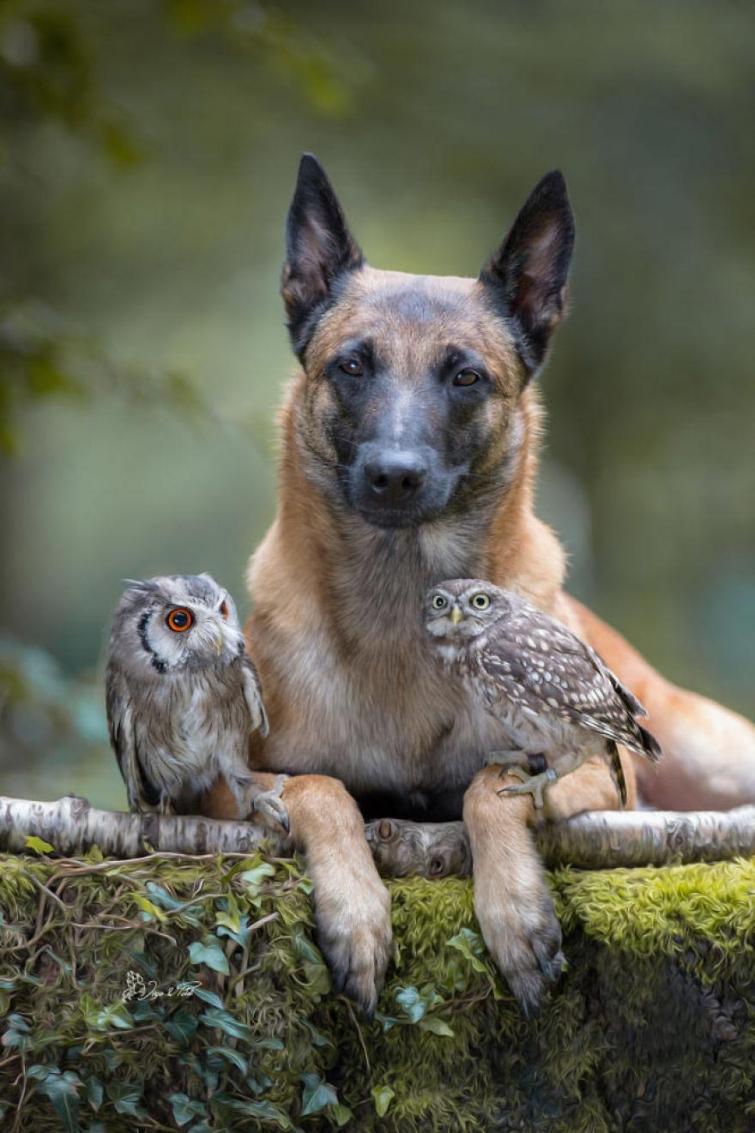 Милые фотографии собаки Инго и её друзей сов