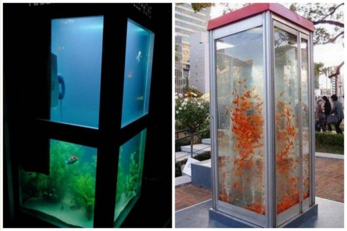 Самые необычные аквариумы