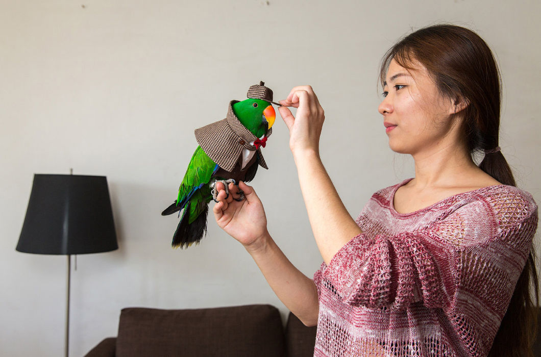 Экзотические домашние животные в Китае