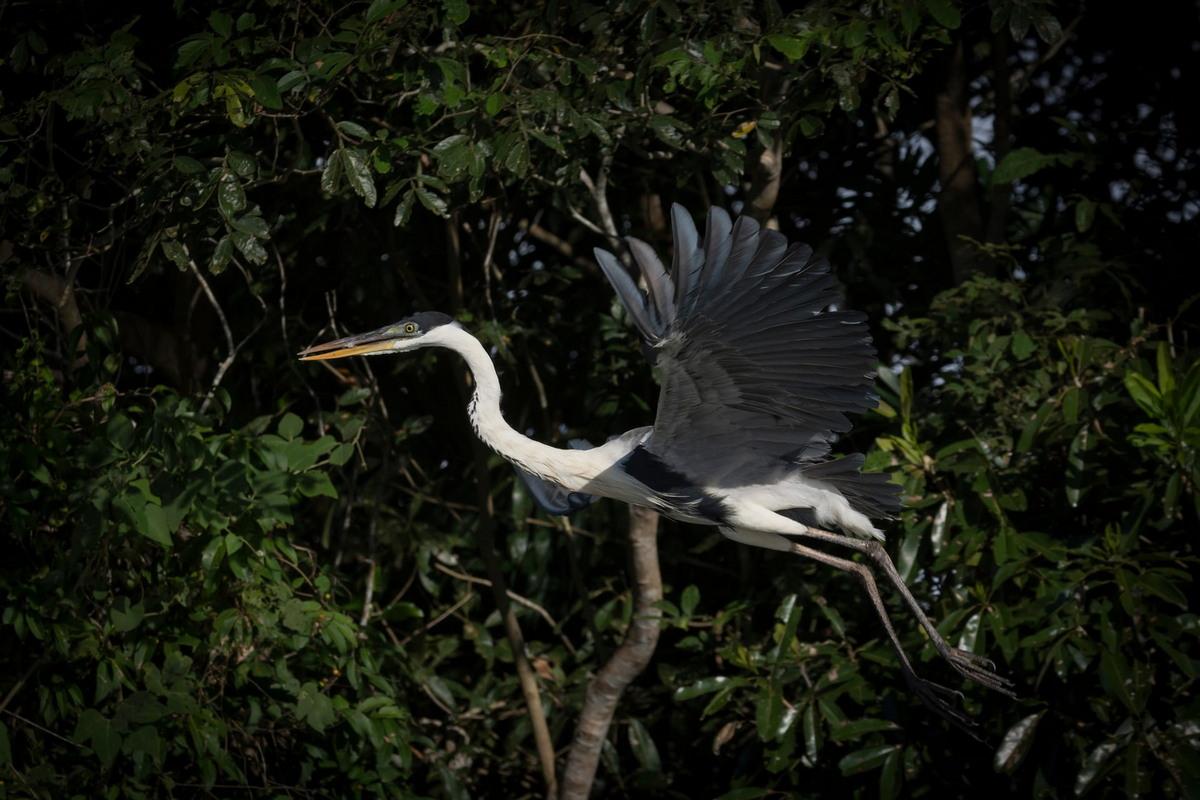 Пантанал в Бразилии - крупнейшие в мире водно-болотные угодья