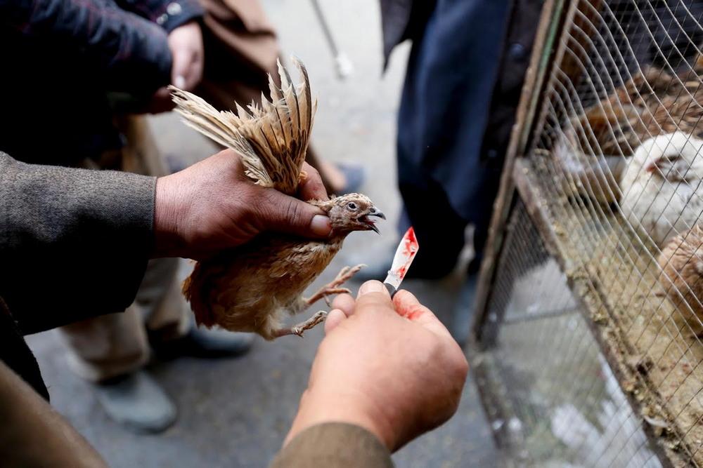 На птичьем рынке в Кабуле
