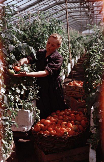 Постановочные цветные снимки советской эпохи