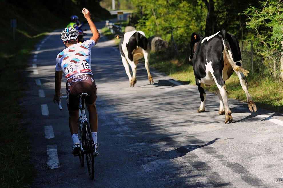 Животные и большой спорт
