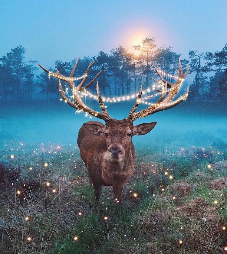 Фотоманипуляции с животными от Роберта Янса