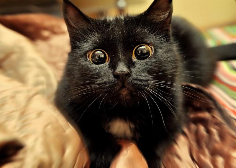 ларгус смешные картинки черные глаза сложить платок
