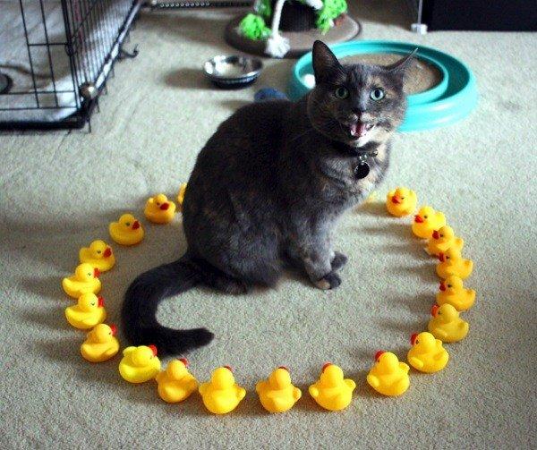 Кошки любят сидеть внутри круга