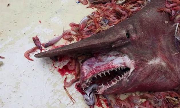 Морские чудовища, попавшие в рыбацкие сети
