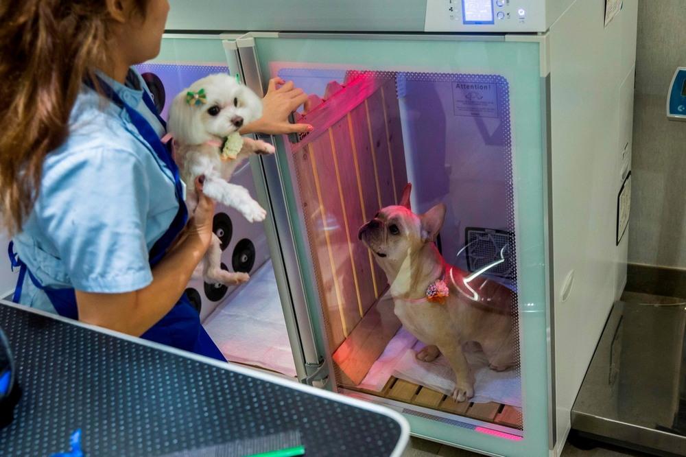 Салоны для собак в Гонконге