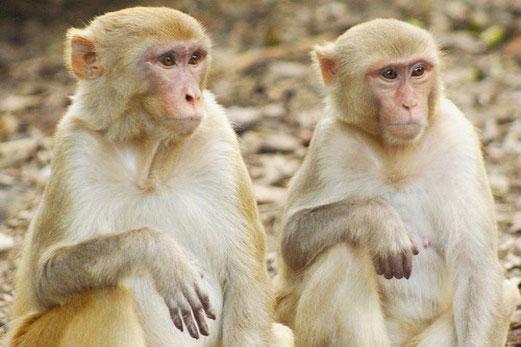 Эти 25 животных умнее, чем мы думали