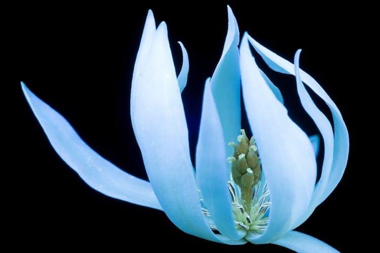 Флуоресцирующие цветы от Крейга Бэрроуза