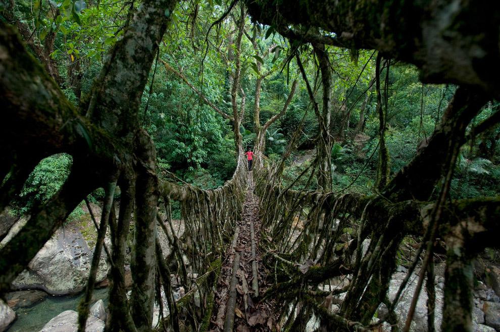 8 самых зрелищных мостов в мире