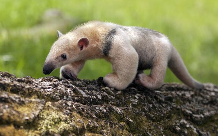Самые милые существа, созданные природой