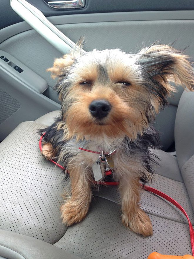 Улыбающиеся собаки заряжают позитивом