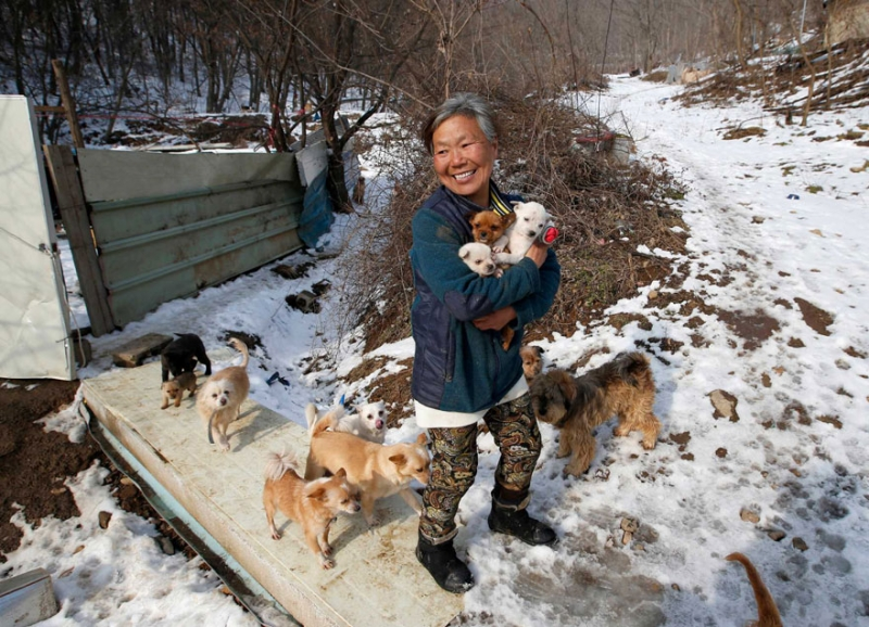 Женщина из Южной Кореи спасла более 200 собак и заботится о них