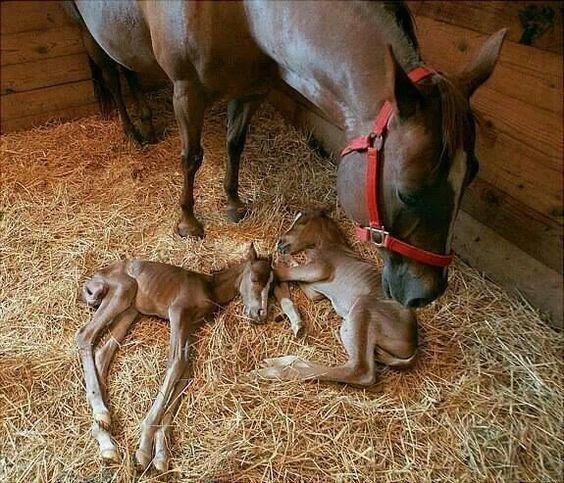 Как выглядят копыта новорожденного жеребенка