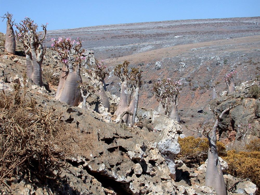 Необычные пейзажи острова Сокотра