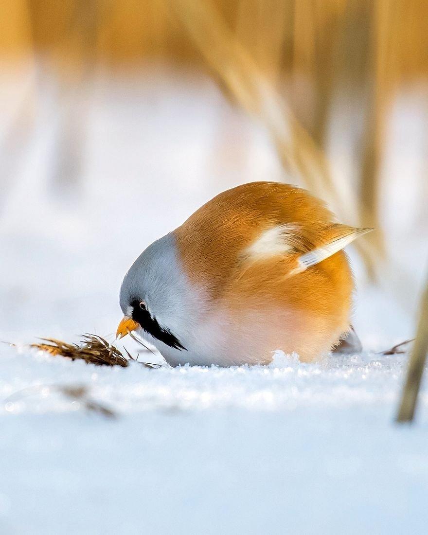 Angry Birds в финских лесах
