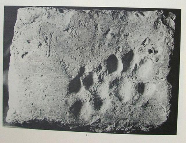 Кошачьи лапы оставили след в истории