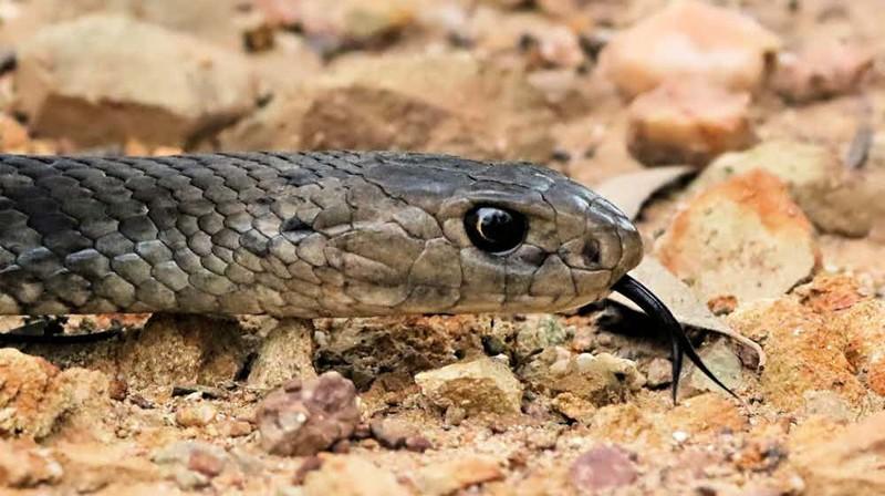 Ужасающие хищники Австралии