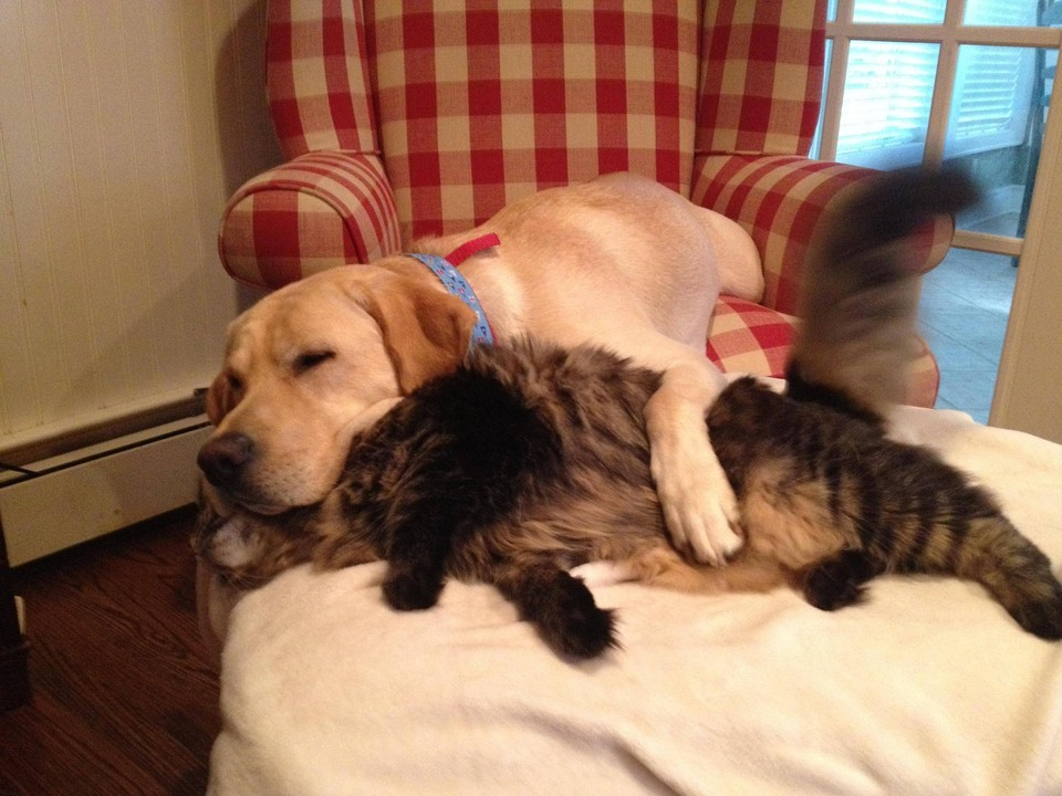 Милая дружба котов и собак