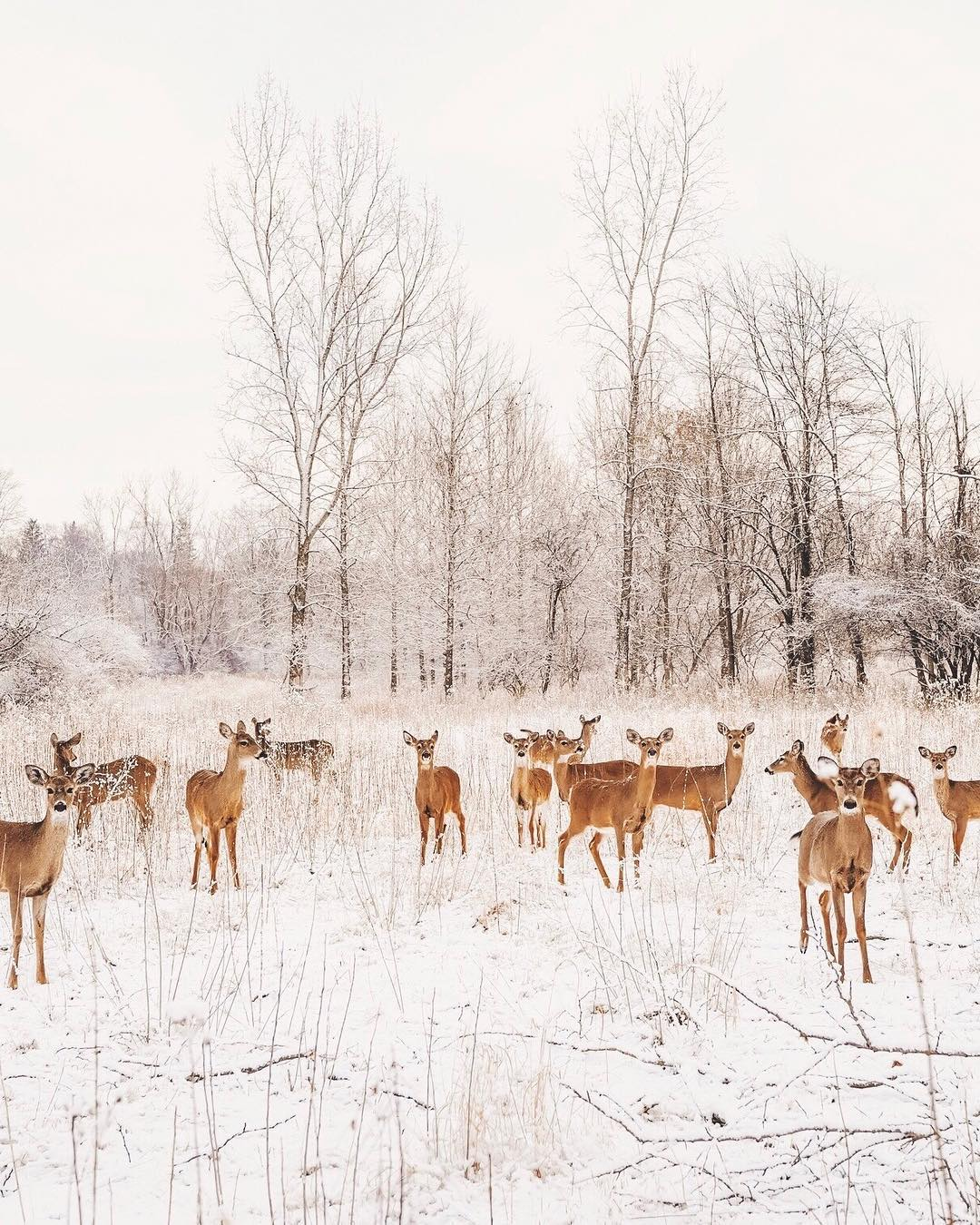Природа и пейзажи с высоты от Эрика Уорда