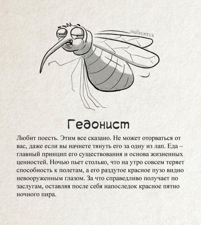 Разные типажи кровопийц: точная классификация комаров