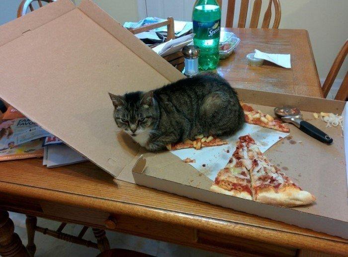 Кошки, которым никогда не бывает стыдно за свои поступки!