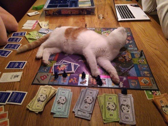 Дурные манеры кошек, которые смешат и раздражают одновременно