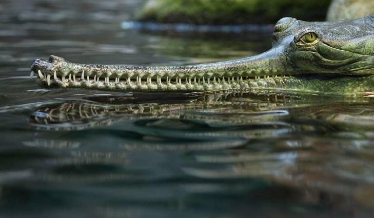 Очень странные животные нашей планеты