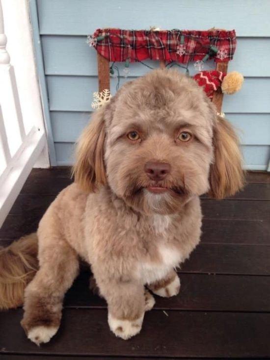 Майли Сайрус завела собаку с человеческим лицом и приставила к ней няню