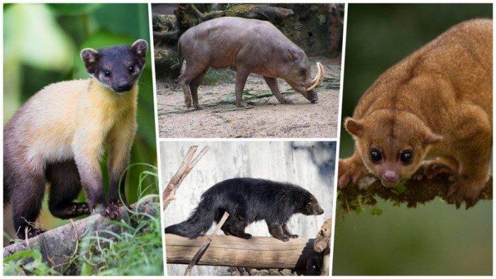 10 интересных животных, о которых мало кто знает