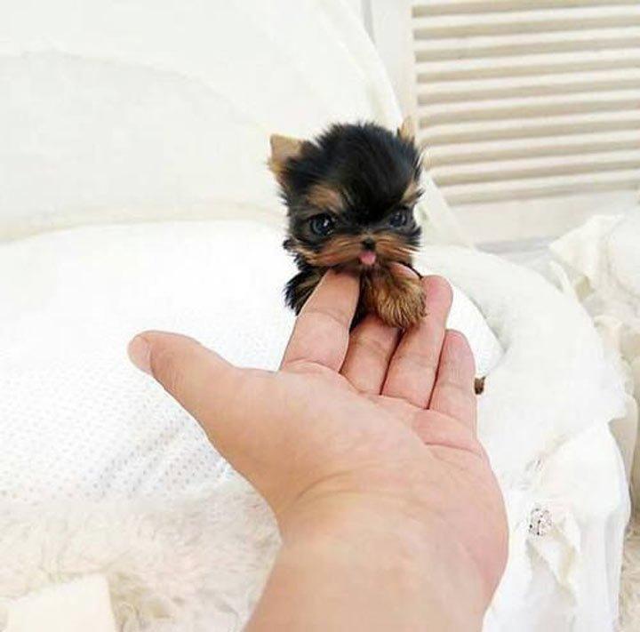 25 милых и очаровательных щенков