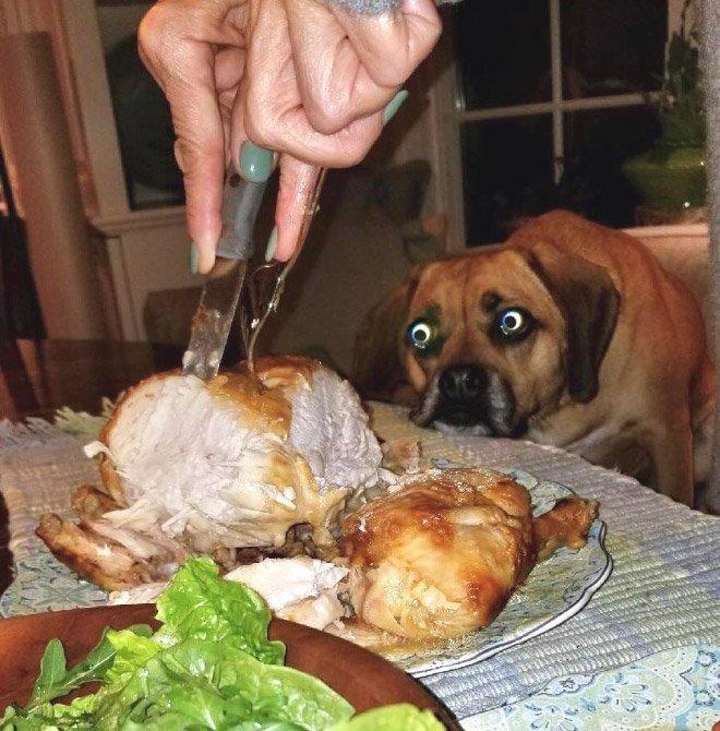 Собаки смотрят на вкусняшки