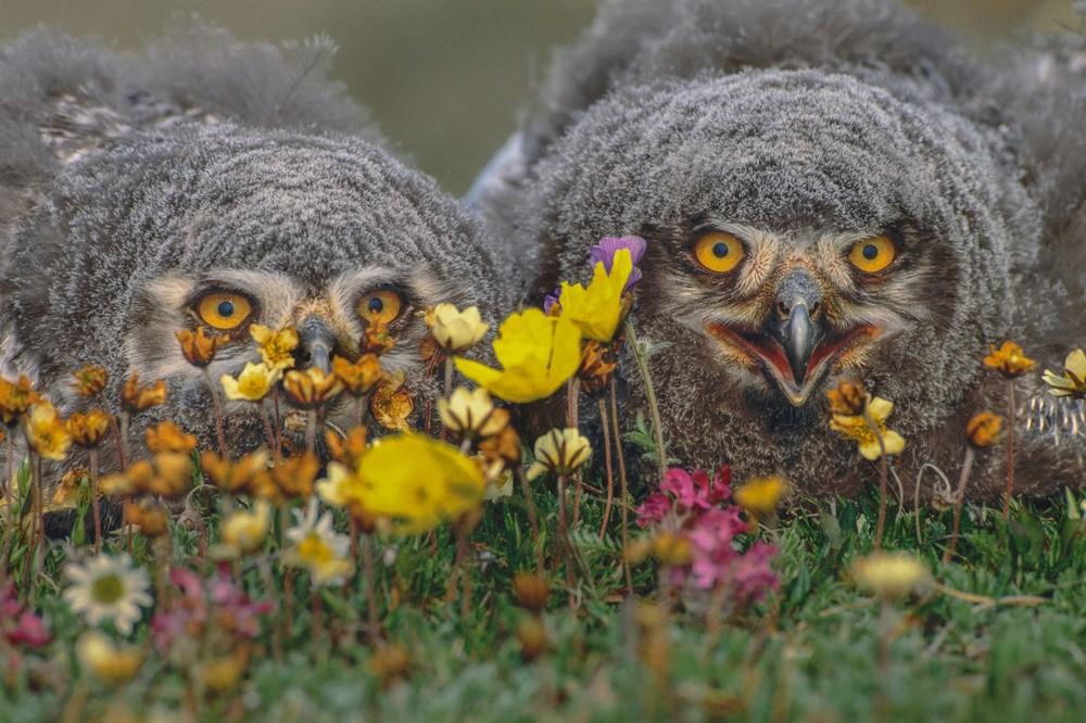 Впечатляющие фотографии от Арта Вулфа