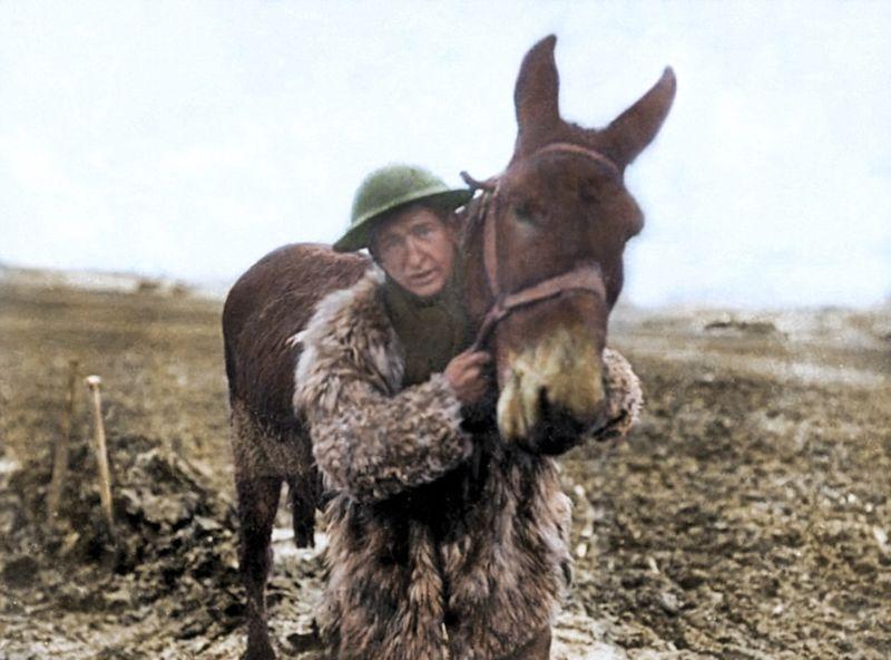 Животные рядом с солдатами во время Первой мировой войны